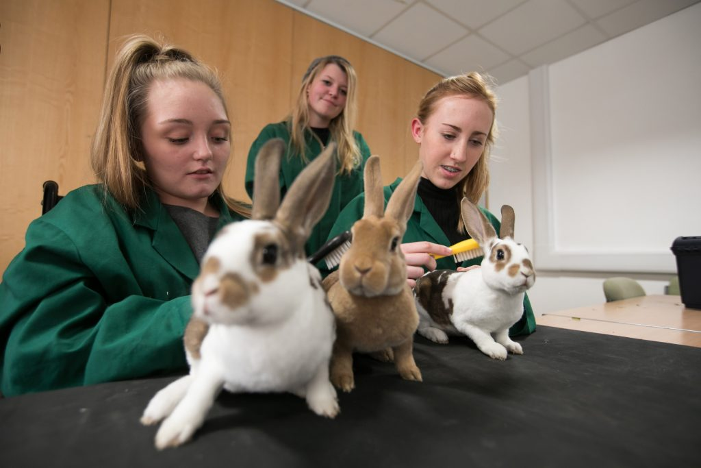 animal care havant south downs college hsdc