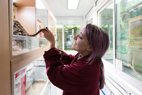 animal management student handling a snake