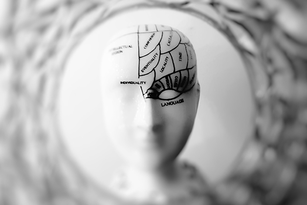 a model of a human head with the brain labelled