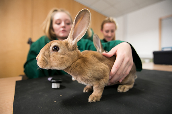 student holding a rabbit