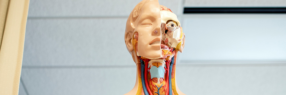 close up of a life size human body focusing on the head