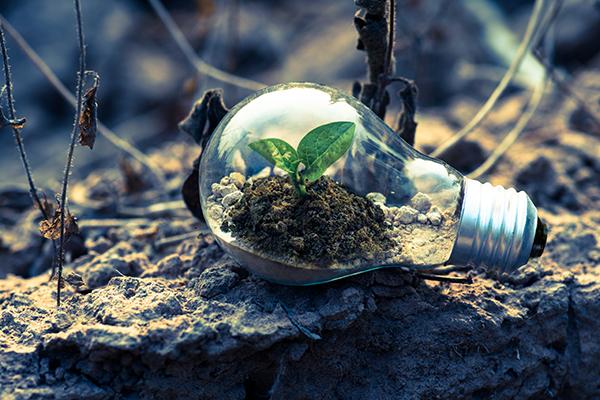 plant growing inside a lightbulb on soil outside