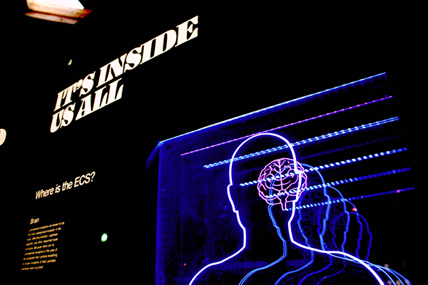 a silhouette of the human body in lights