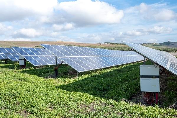 solar panels lined across a field